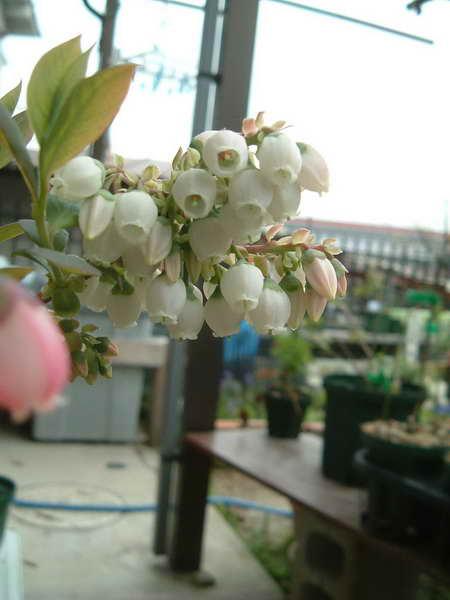 サミットの花