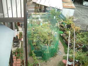 ブルーベリーの庭1