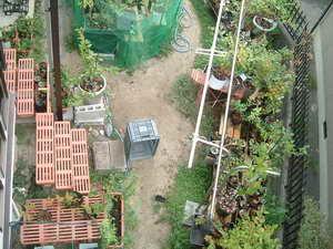 ブルーベリーの庭3