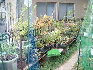 ブルーベリーの庭5