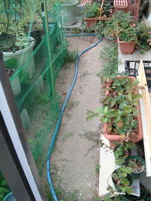 ブルーベリーの庭7
