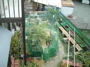 ブルーベリーの庭2