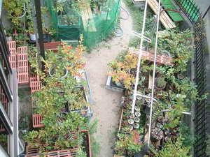 ブルーベリーの庭4