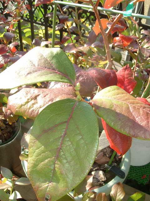 スパルタン花芽1