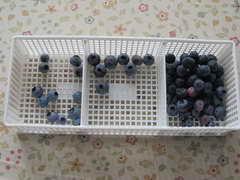 ブルーヘブン収穫