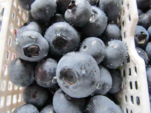 スパルタンの果実