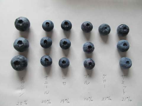 ブルーベリーの果実