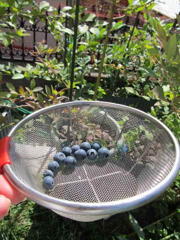 バルドウィンの果実