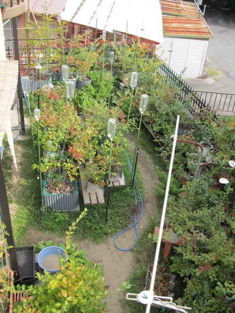 ブルーベリーの庭