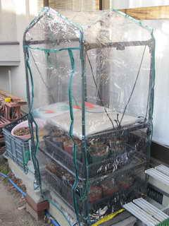 ブルーベリーの温室