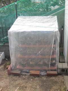 ビニール温室の修理