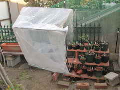 ビニール温室が、、、