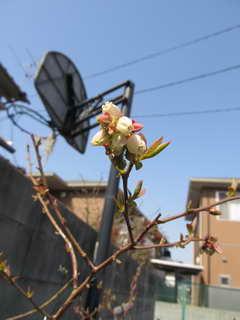 オニールの花2
