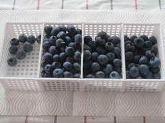 ブルーベリーの果実1