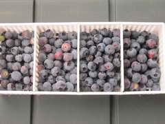 ブルーベリーの果実2