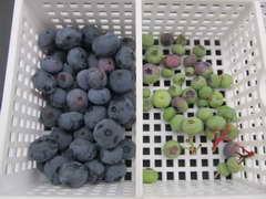 ダローの果実