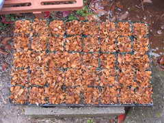 挿し木用土3
