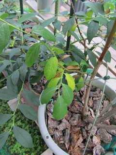スパルタンの葉2
